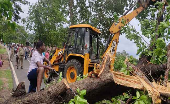 Tree uprooted in cyclone