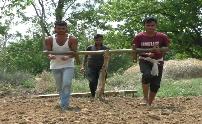 Humanbeing act as bull for farming