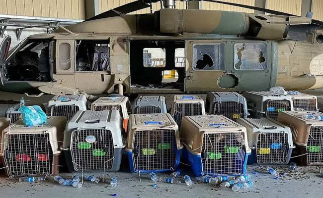 service-dogs-in-kabul